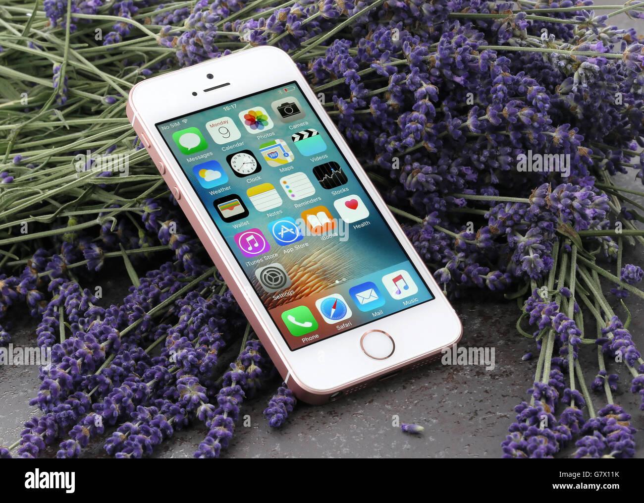 Rosa iPhone SE auf einem Lavendel-Hintergrund Stockbild