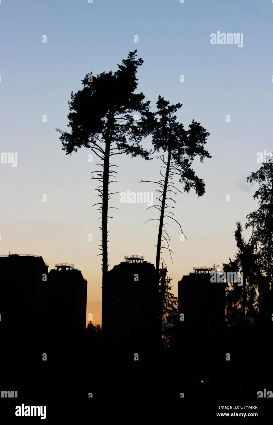 Orange Sonnenuntergang, zwei Kiefern und drei Kontur Häuser Stockbild