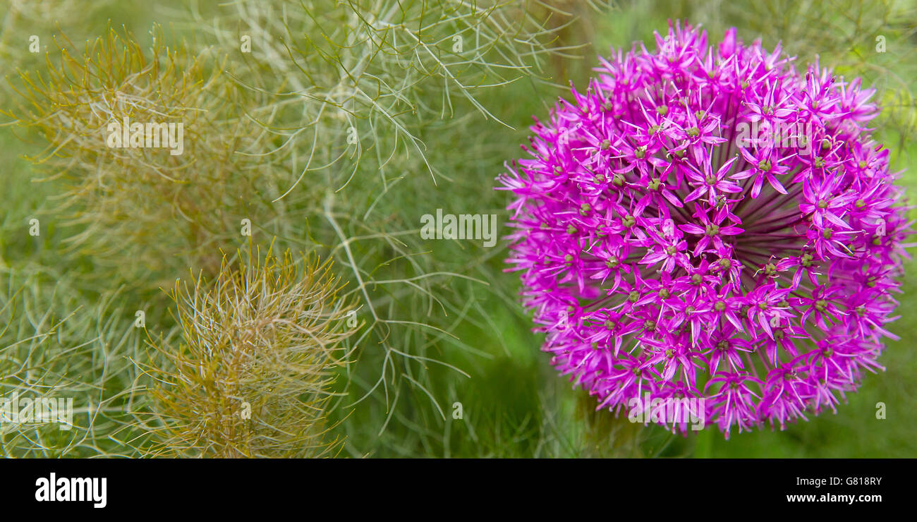 Fennel landscape stockfotos fennel landscape bilder alamy for Lila und grun mischen