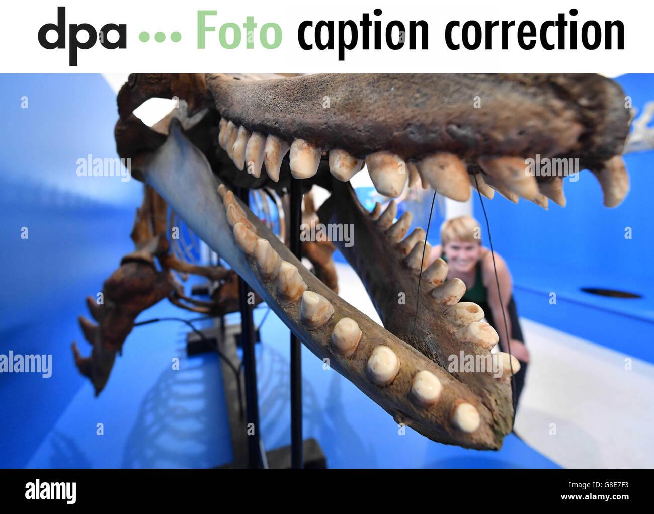 Viele Wale datierenEramoniale Datierung relatii-elmaz.ro