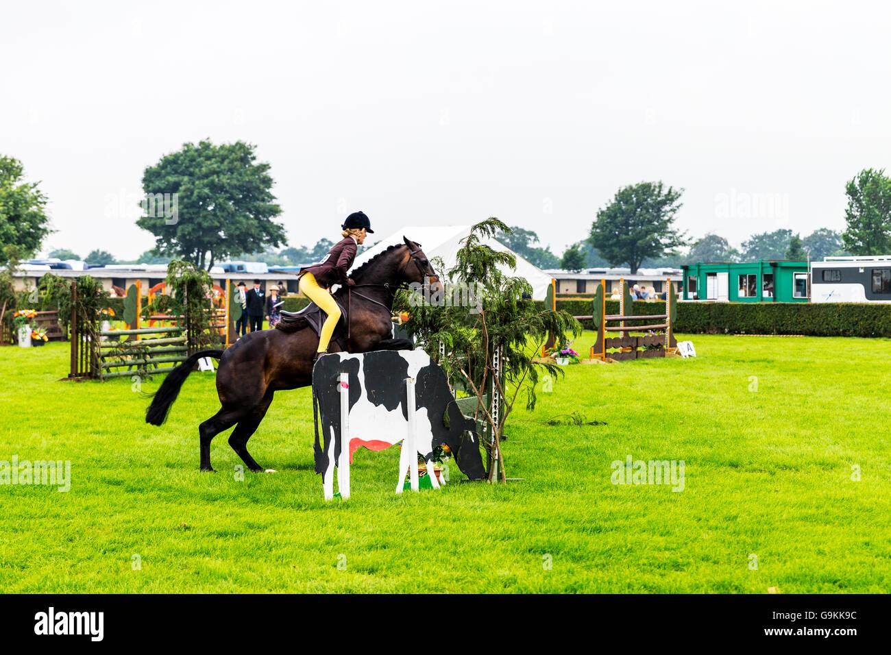 Pferd springen Sprung über Hindernis Gymkhana junges Mädchen reiten über den Zaun springen auf UK Stockbild