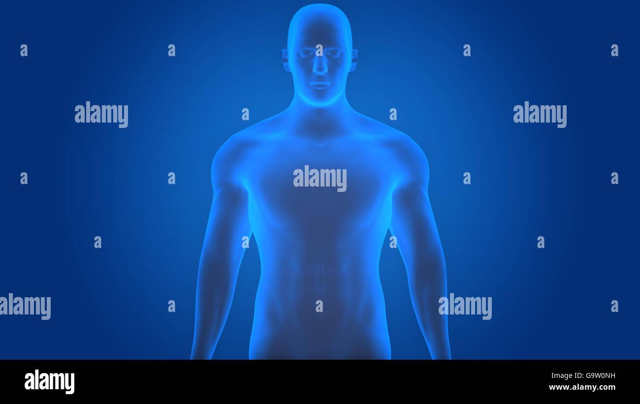 Menschlichen männlichen Muskel Körper Anatomie Stockfoto, Bild ...