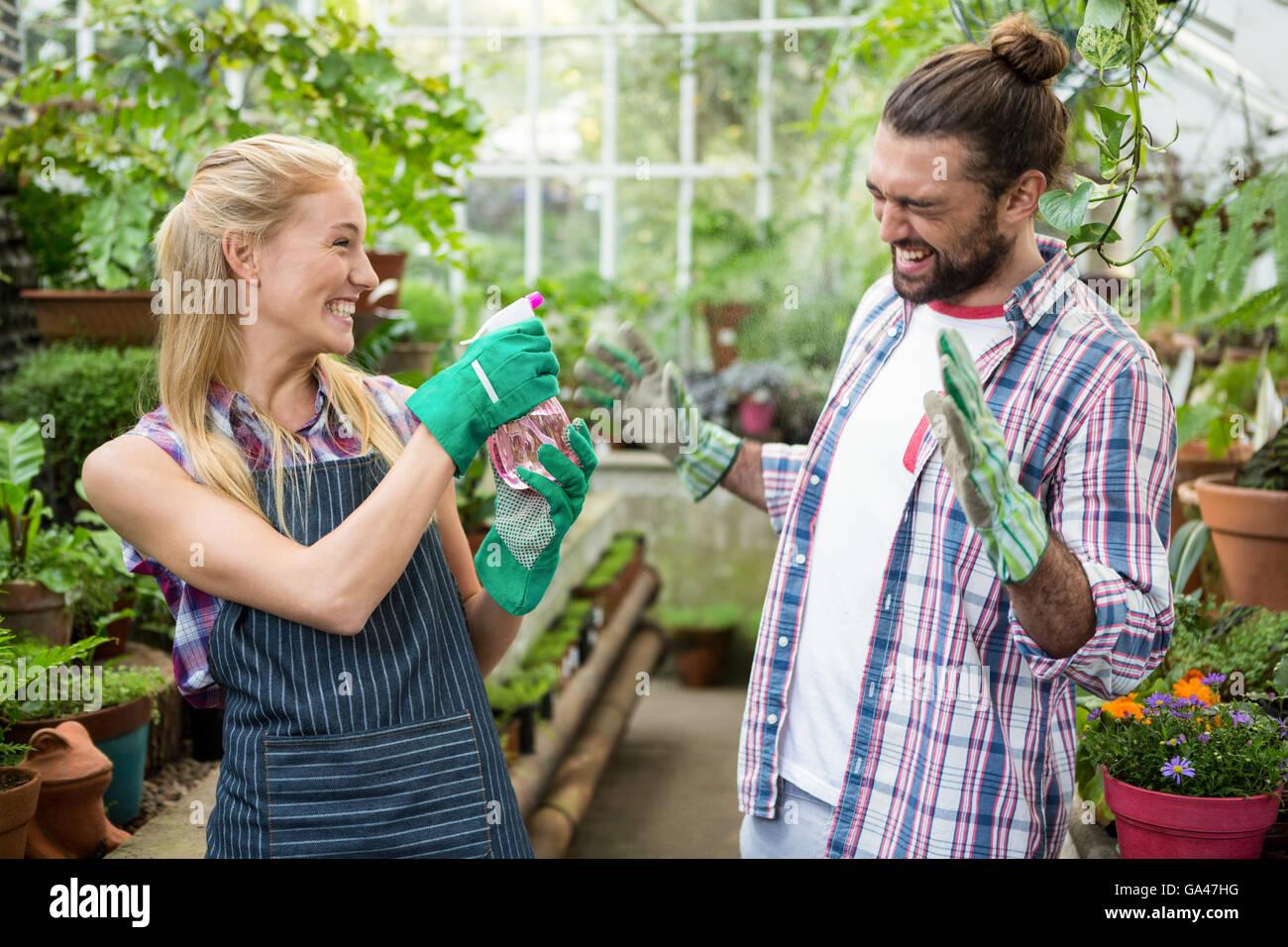 Fröhlicher Gärtner Sprühwasser auf Kollegen im Gewächshaus Stockbild