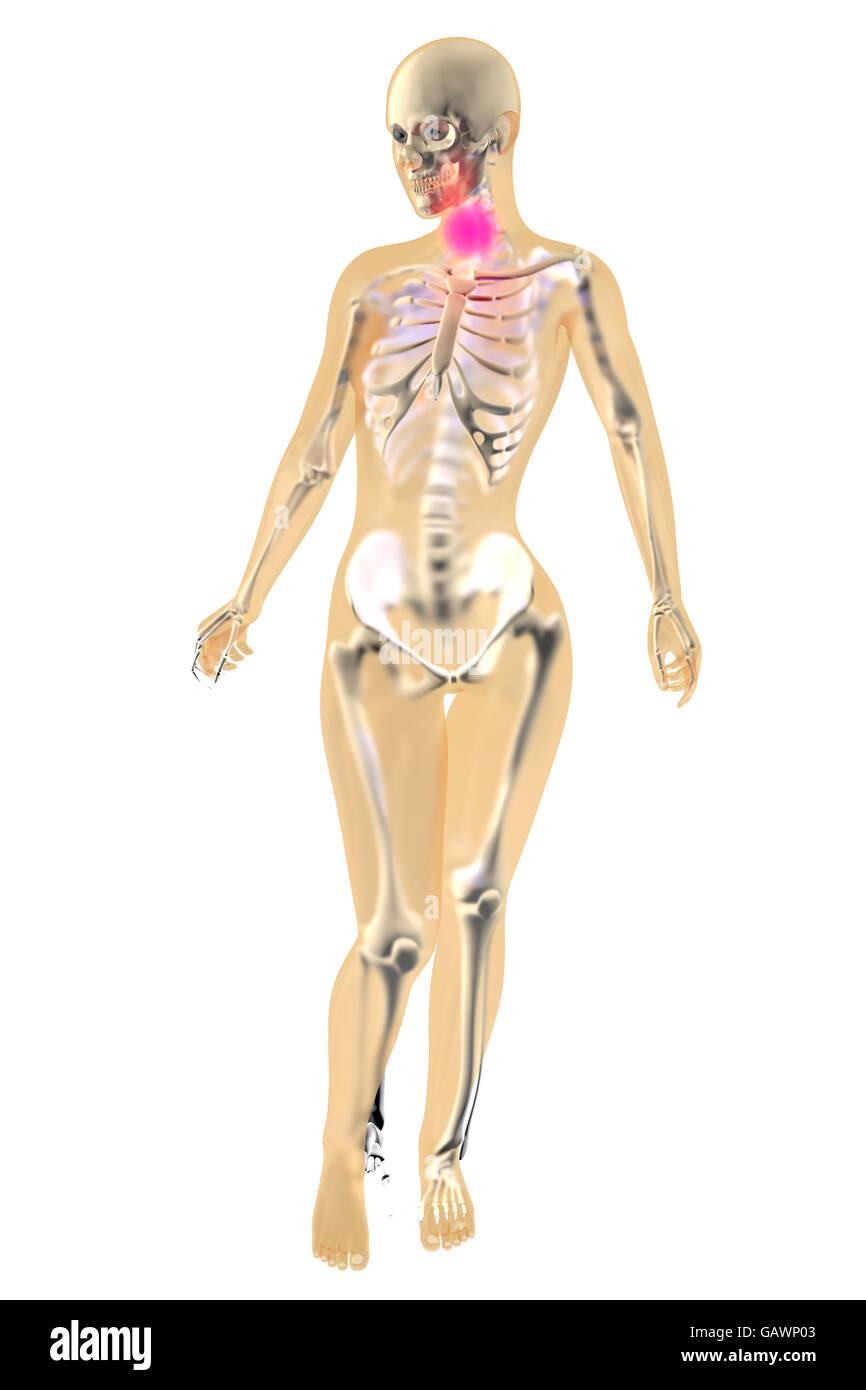 Wunderbar Anatomie Hals Drüsen Bilder - Menschliche Anatomie Bilder ...