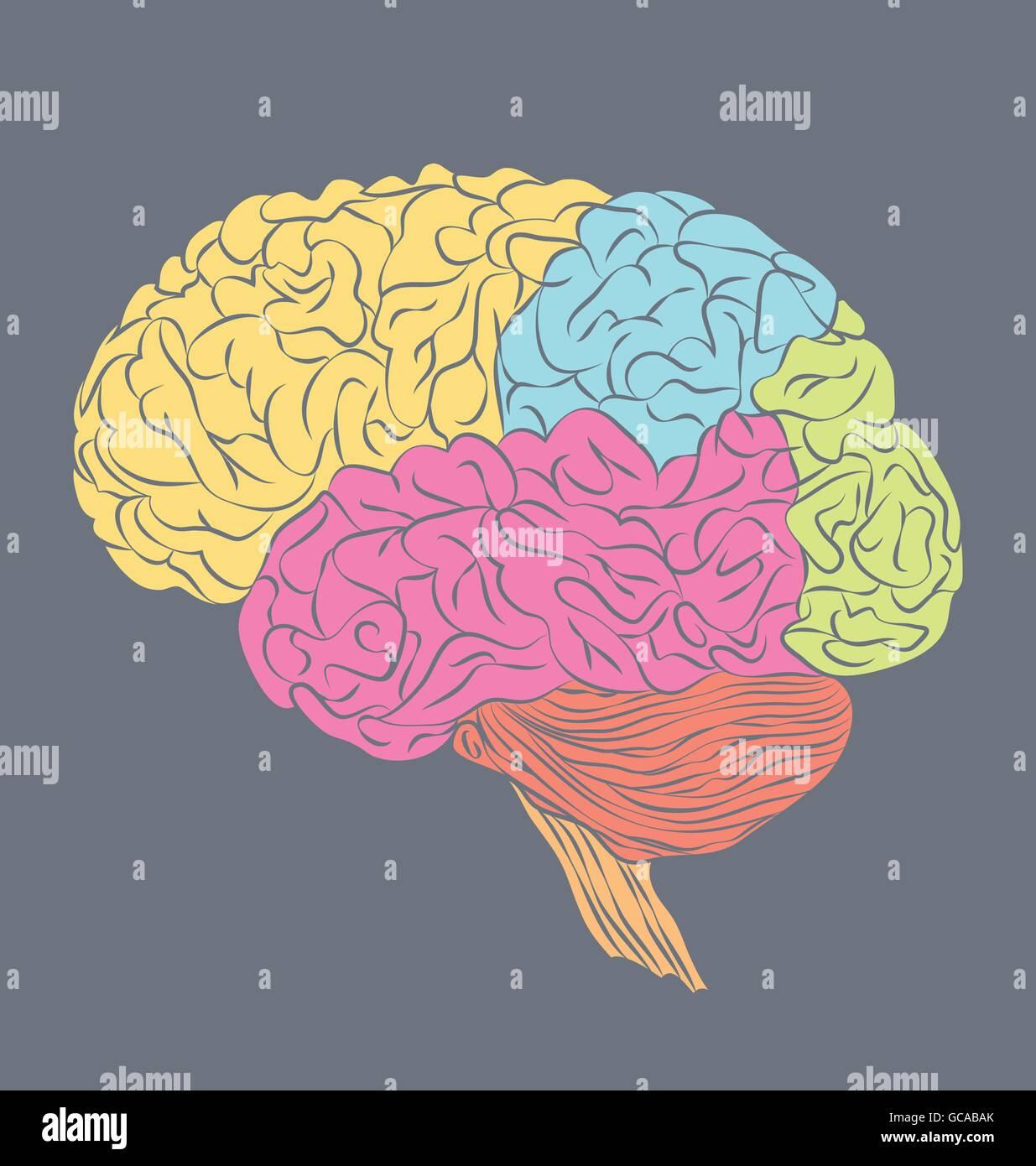 Fantastisch Oberflächenanatomie Des Gehirns Zeitgenössisch ...