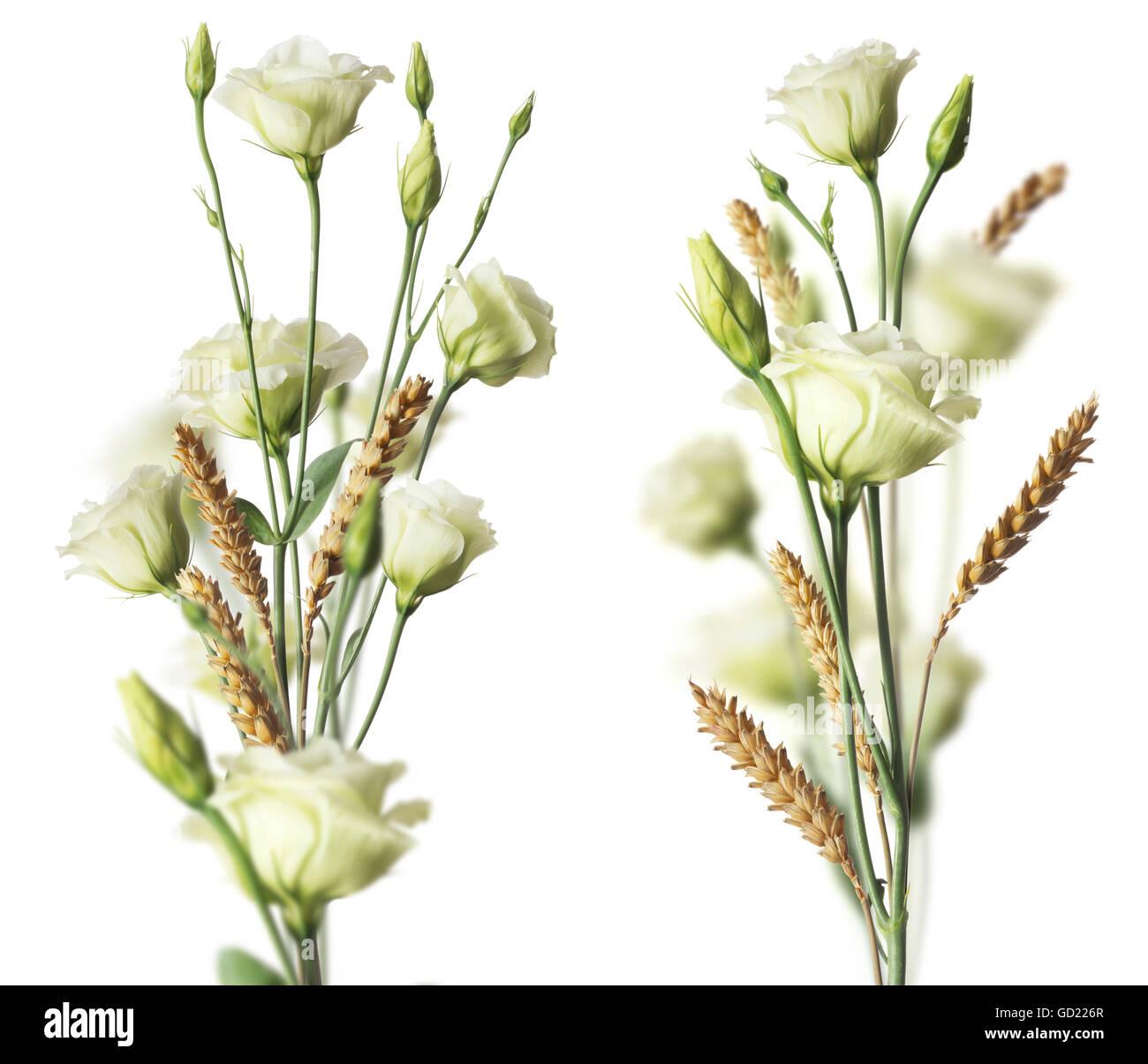 Zwei Weisse Blumenstrausse Und Weat Mit Blurr Effekt Bild Auf Weissem
