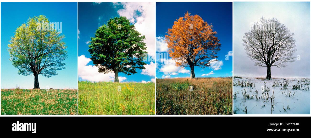 Baum In Vier Jahreszeiten Stockfotos Baum In Vier Jahreszeiten