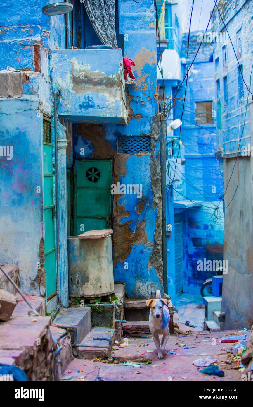 Blaue Häuser straßenszene blaue häuser jodhpur die blaue stadt rajasthan