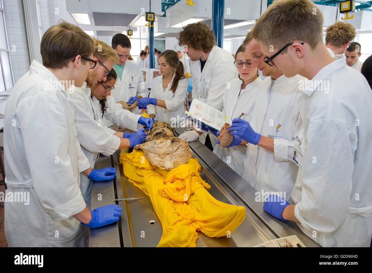 Greifswald, Deutschland. 5. Juli 2016. Studierende der Medizin ...