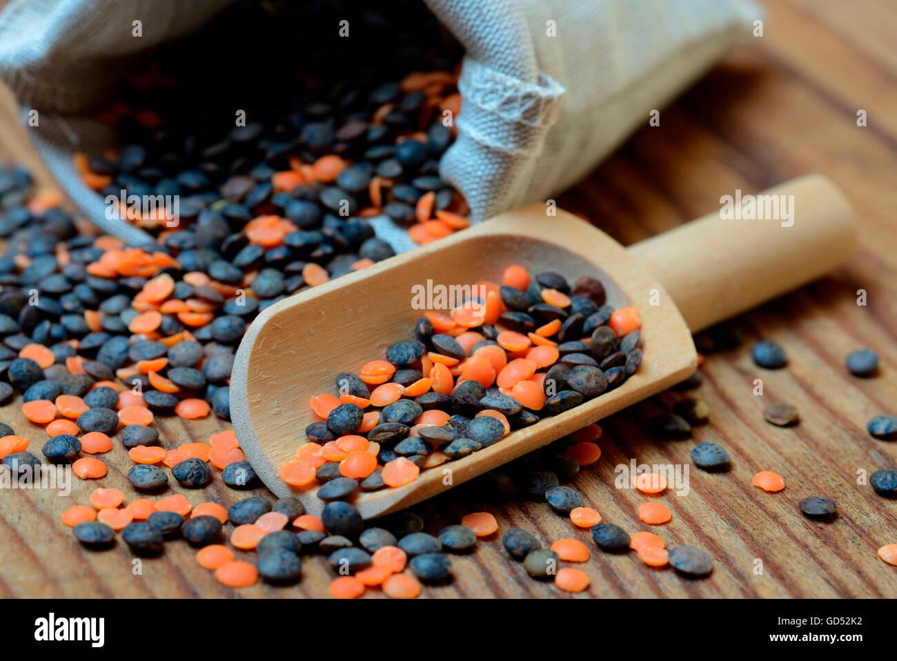 Rote und grüne Lentlis / (Lens Culinaris) Stockbild