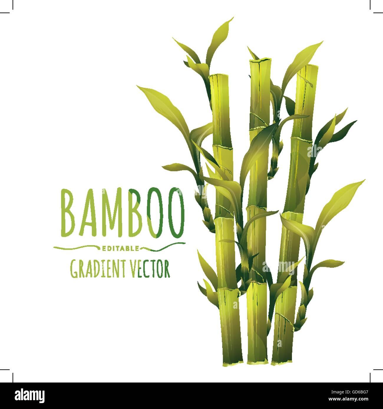 Bambus Vektor Illustration Vektor Abbildung Bild 111393527 Alamy