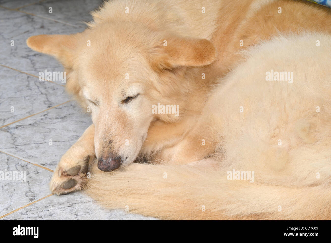 guard sleeping stockfotos guard sleeping bilder alamy. Black Bedroom Furniture Sets. Home Design Ideas
