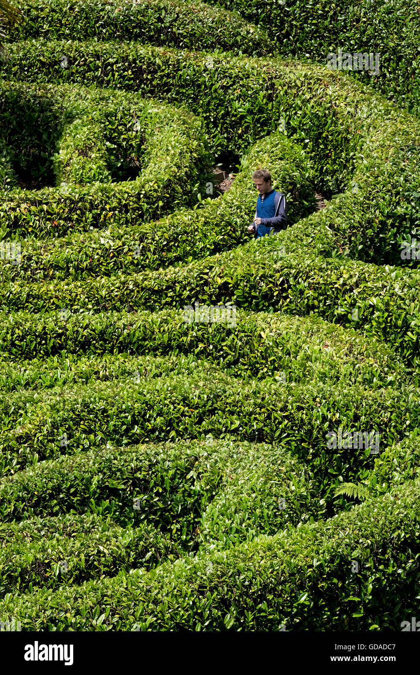 Eine Person in einem Lorbeerkranz Labyrinth verloren. Stockbild