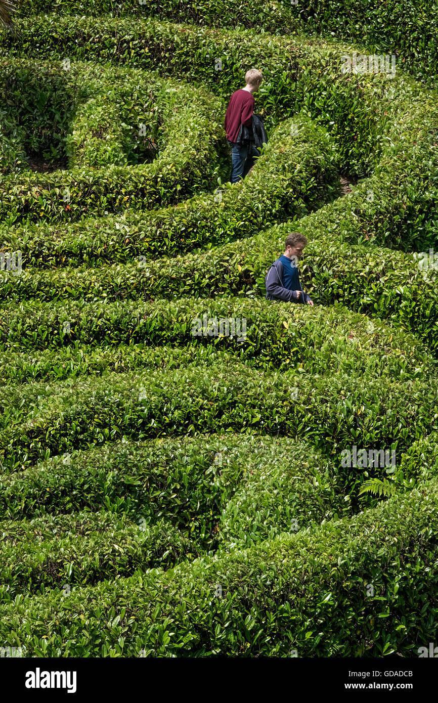 Menschen in einem lorbeerkranz Labyrinth verloren. Stockbild