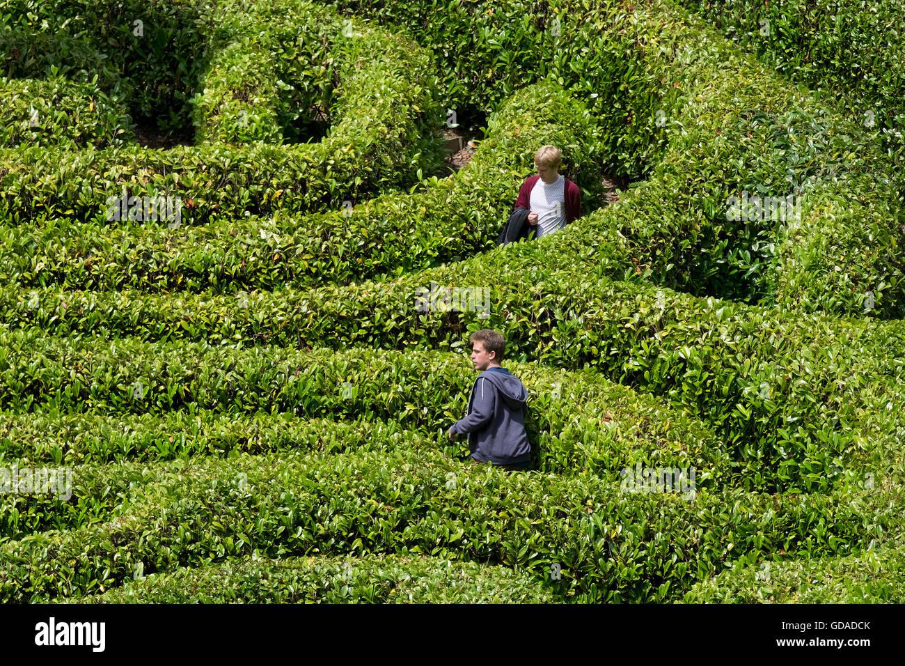 Menschen verloren in einem Labyrinth von Lorbeer. Stockbild