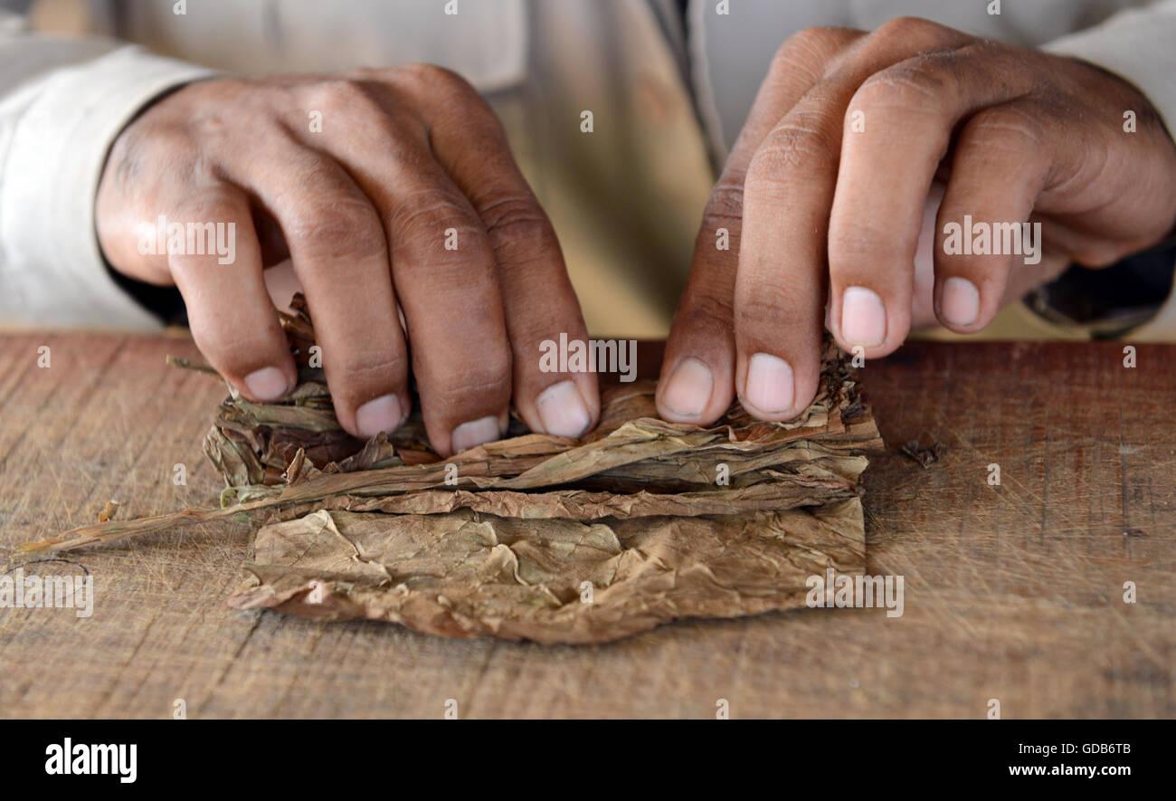 Hand gerollt kubanische Zigarren von lokalen Tabakbauern Viñales Kuba. Stockbild