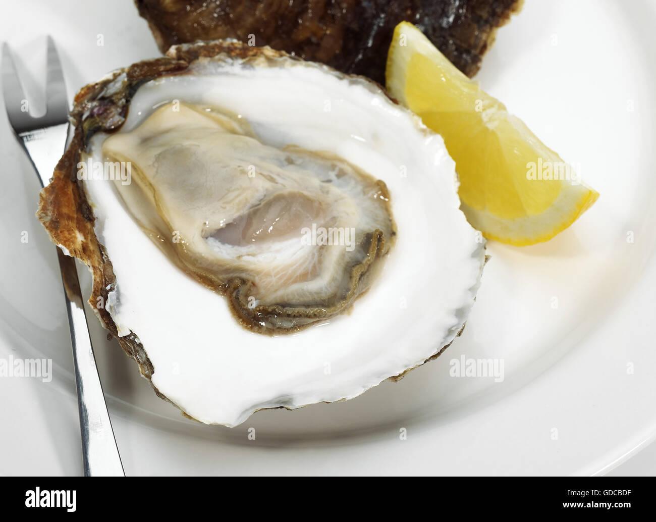 french belon oyster stockfotos french belon oyster bilder alamy. Black Bedroom Furniture Sets. Home Design Ideas