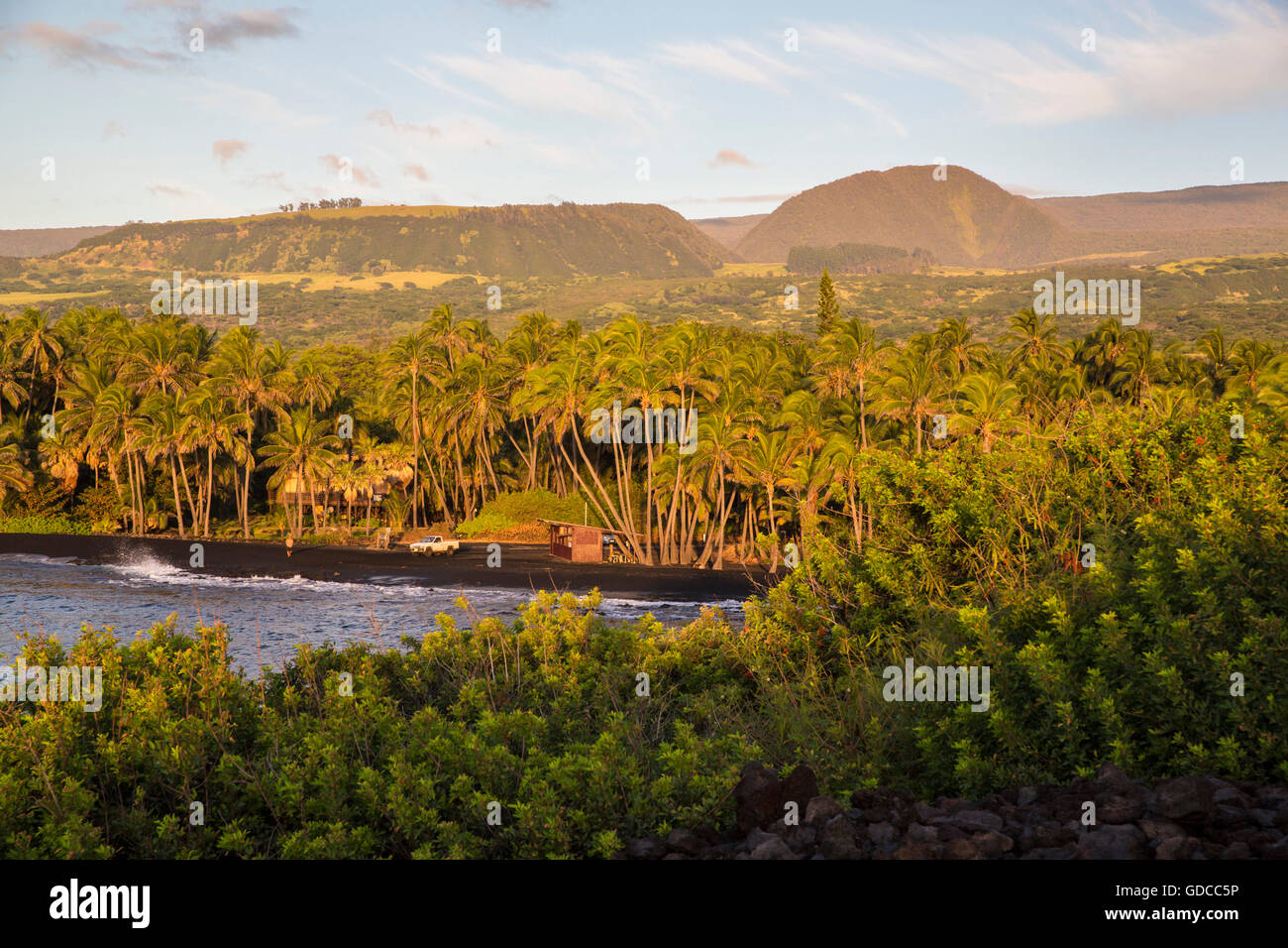 Big Island, Palmen, Punaluu, Black sand Beach, Big Island, USA, Hawaii, Amerika, Palmen, Stockbild