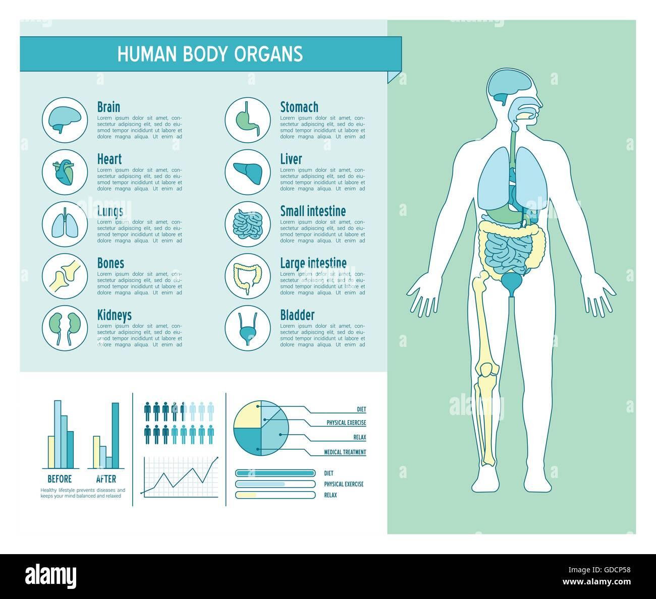 Berühmt Medizinische Diagramm Des Menschlichen Körpers Fotos ...