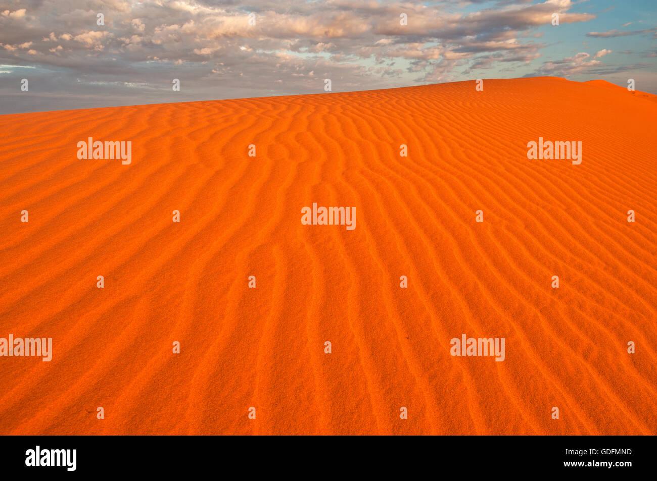 Roten Dünen der Simpson Wüste im Sonnenaufgang leuchtend. Stockbild