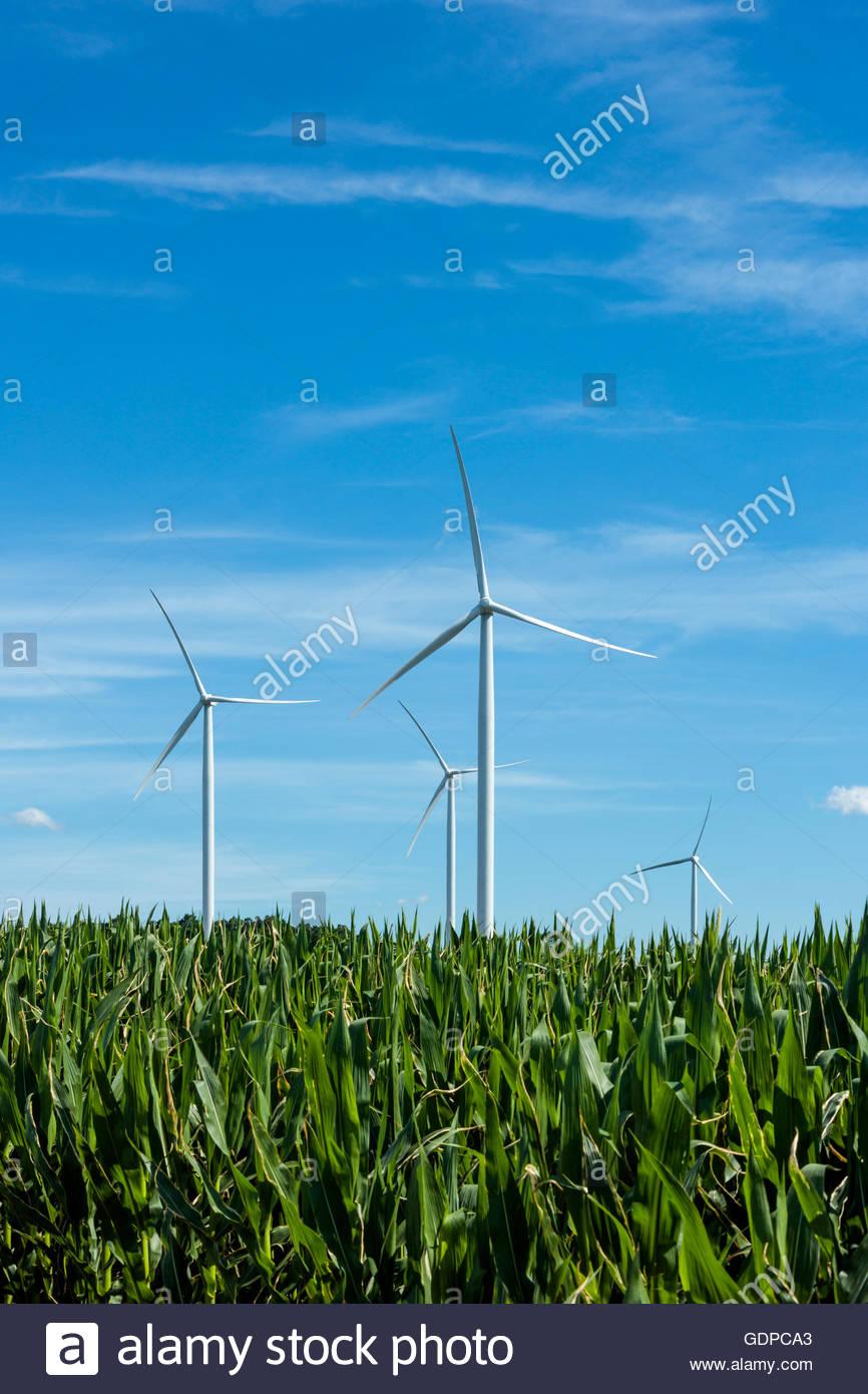 Alternative Energie aus Windkraftanlagen und Bioethanol aus Mais in Ontario Kanada. Biofuel Alternative Turbine Stockbild