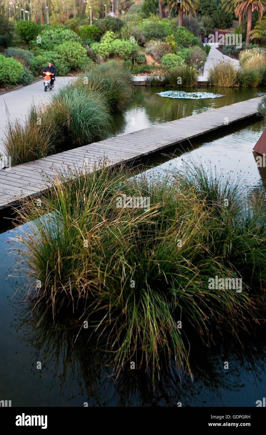 Botanischer Garten Barcelona Barcelona Spanien Stockfoto Bild