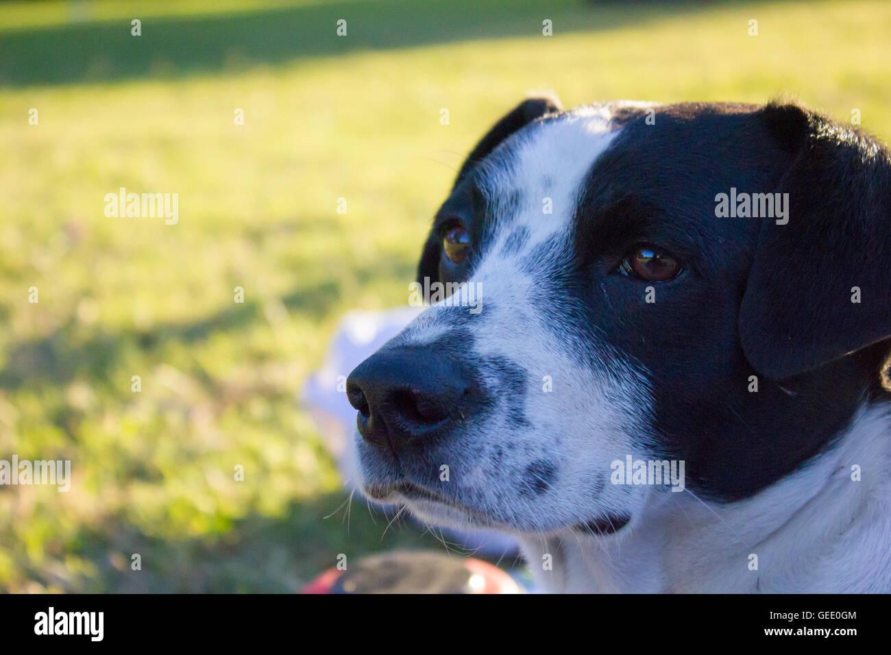 Hund auf der Suche von Kamera im park Stockbild