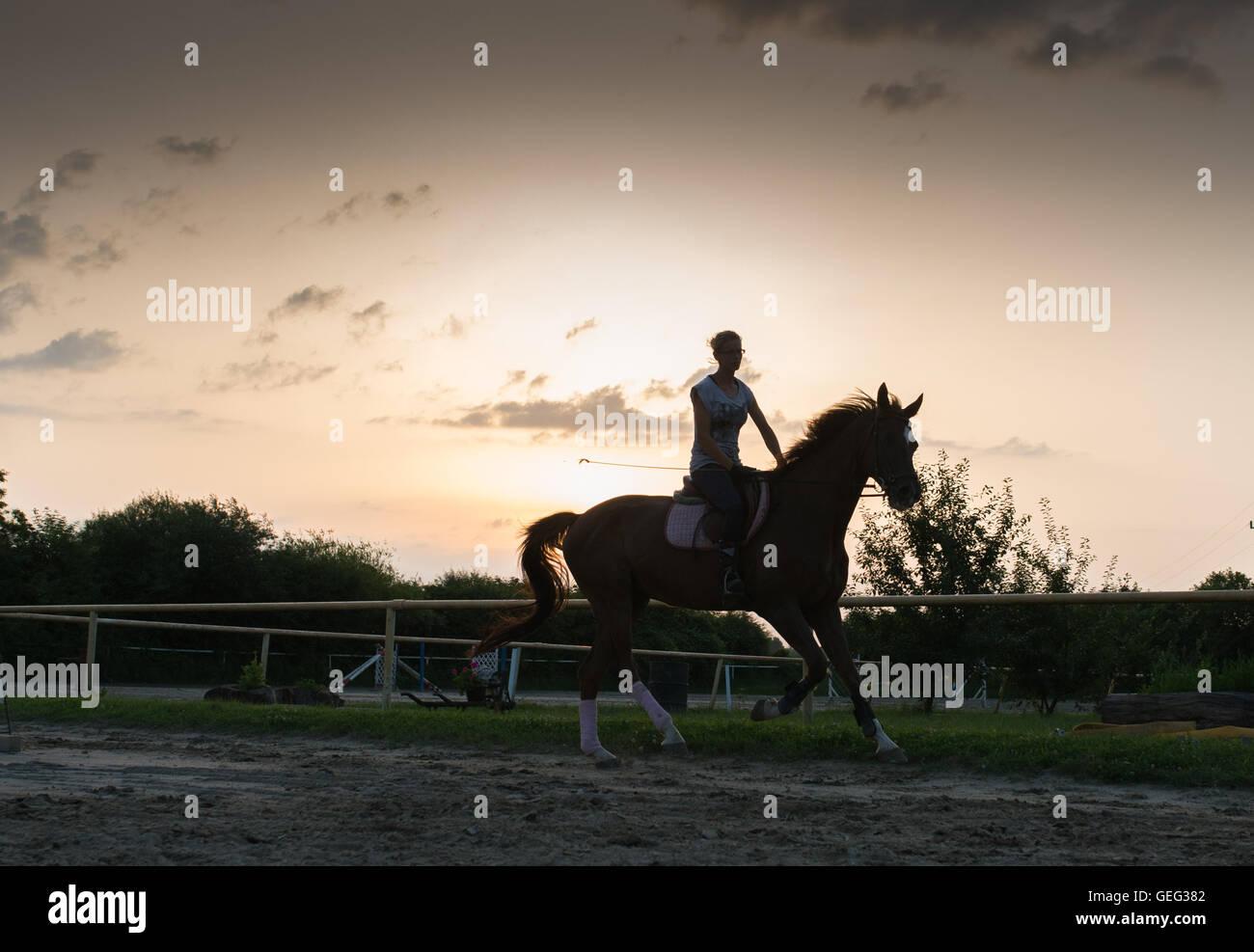 Junge hübsche Mädchen auf einem Pferd Stockbild