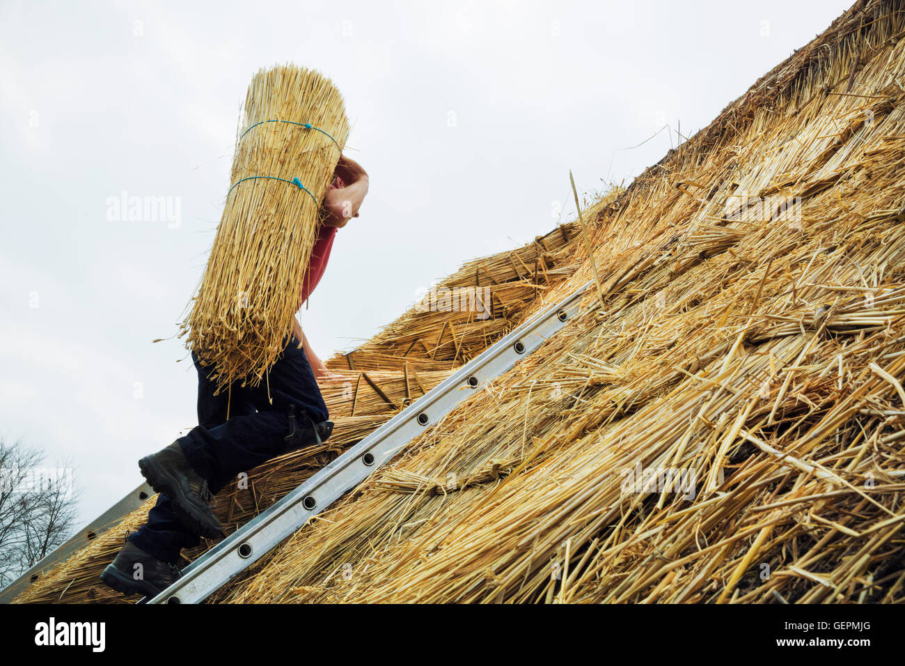 Thatcher Yelm Stroh auf ein Dach zu tragen. Stockbild