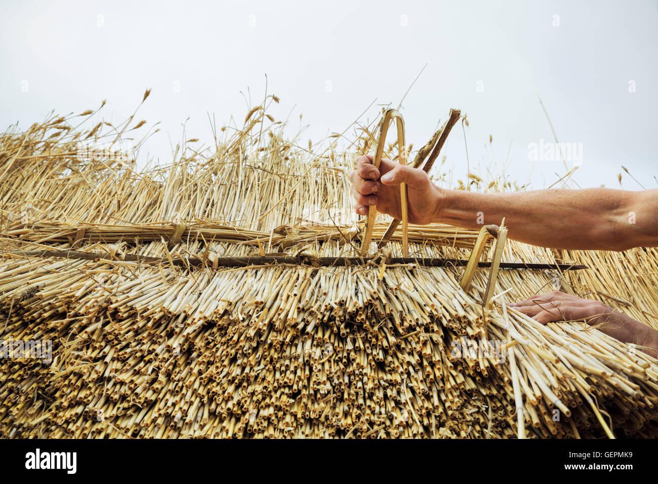 Mann thatching Dach, Einfügen von Hasel Holz Holme, um das Stroh zu befestigen. Stockbild