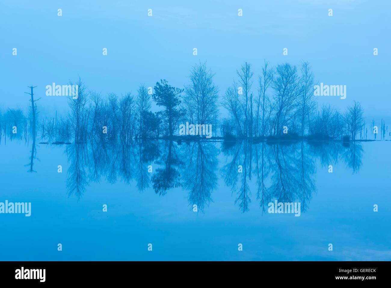 Zur Blauen Stunde, Moor, Goldenstedter Moor, Niedersachsen, Deutschland Stockbild