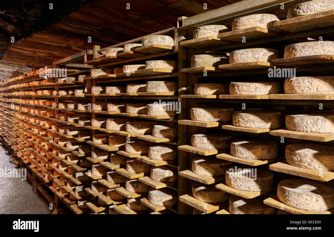 Tomme de Savoie Käse Altern in der Höhle des Monts et Terroirs. Montmélian, Savoie, Frankreich. Stockbild