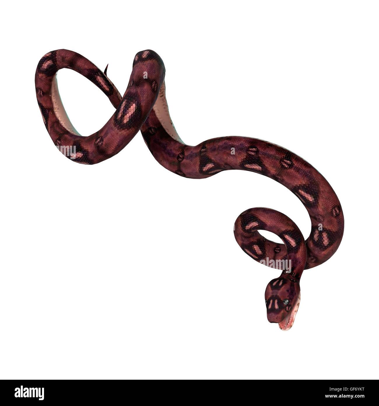 Ungewöhnlich Süße Schlange Färbung Seite Fotos - Entry Level Resume ...