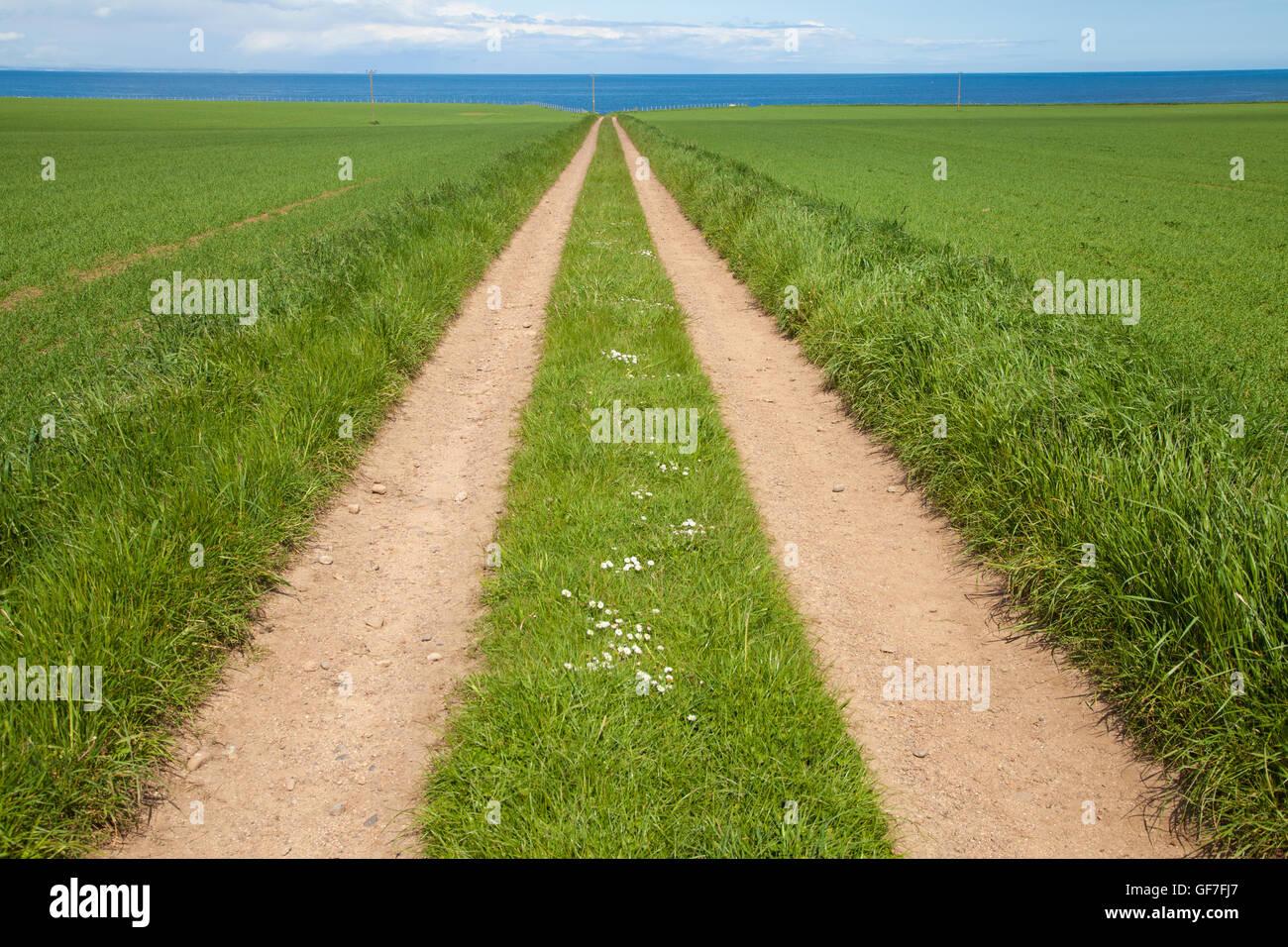 Ein Weg durch ein Feld in der Ferne verschwindet. Stockbild