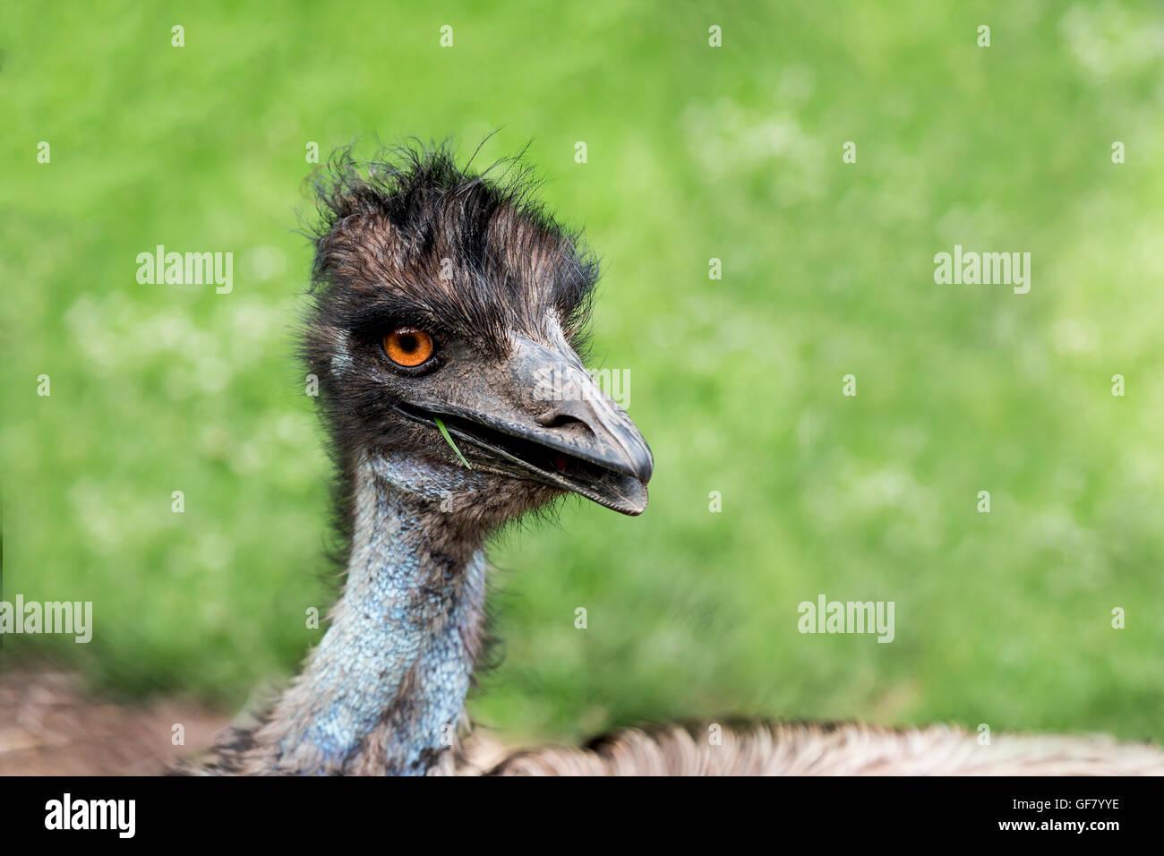 Eine neugierige WWU posieren für ein Foto an der Toronto Zoo, Canada. Stockbild
