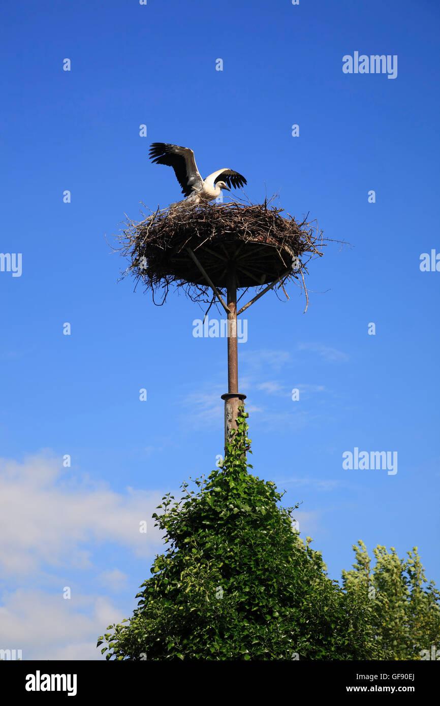 Storchennest in Dargow, Schleswig-Holstein, See Schaalsee, Deutschland, Europa Stockbild