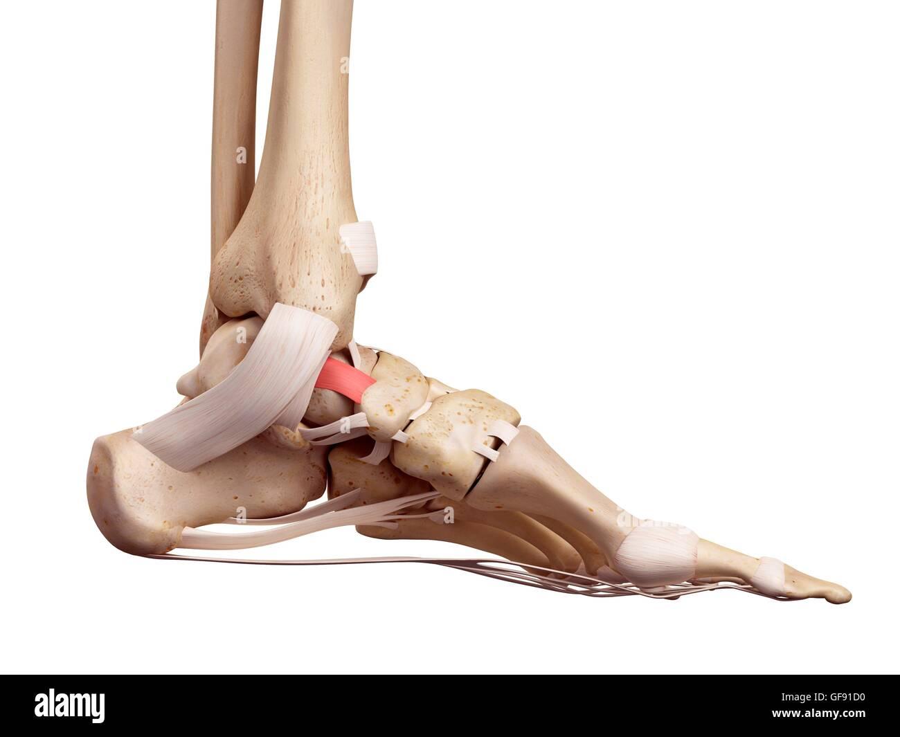 Ziemlich Oberfläche Anatomie Der Hand Galerie - Anatomie Ideen ...