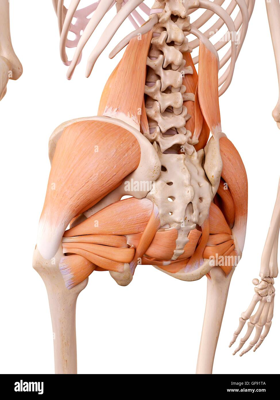Tolle Frauen Menschliches Körperbild Ideen - Menschliche Anatomie ...