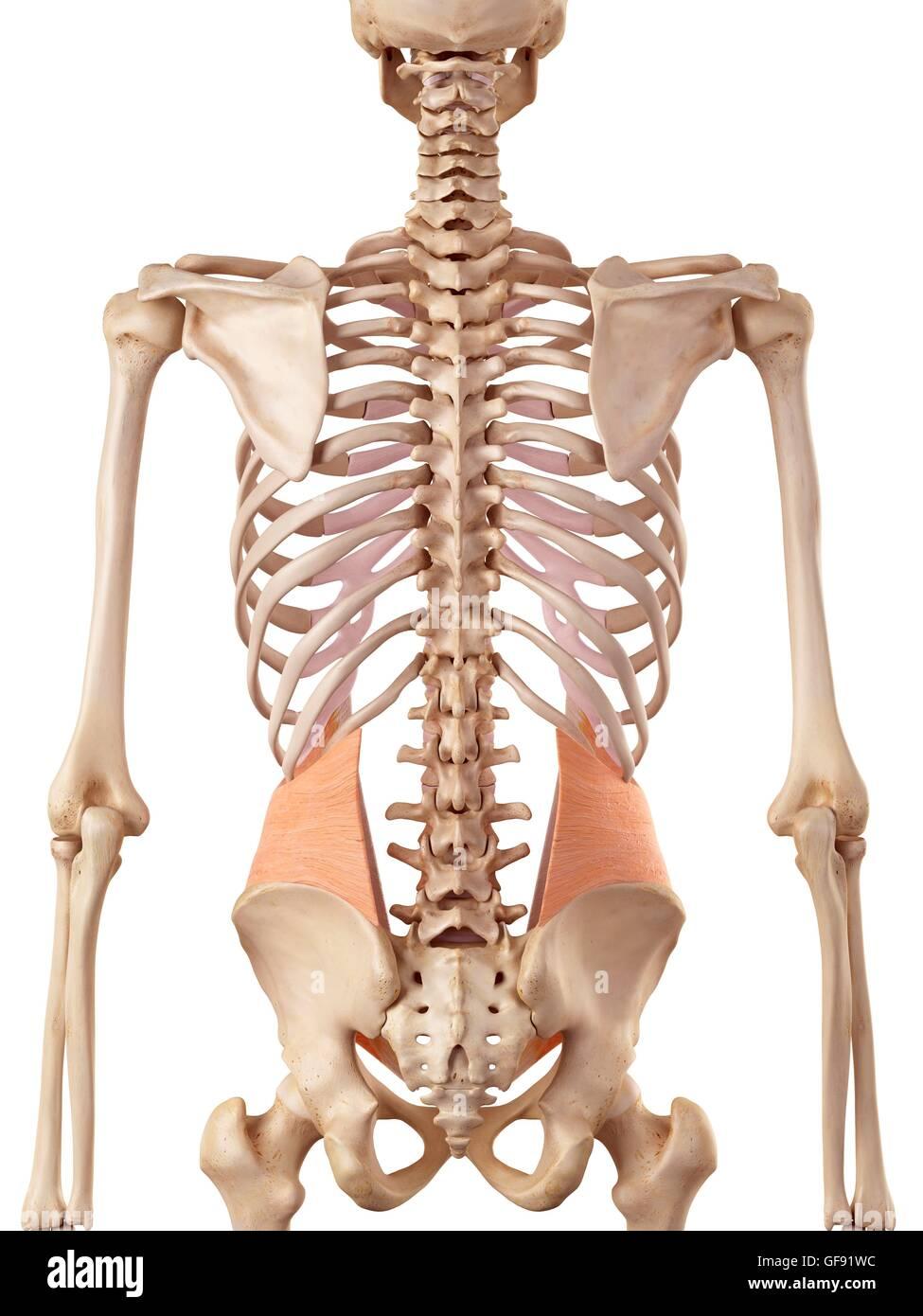 Erfreut Menschliche Anatomie Rechte Seite Bauch Bilder - Anatomie ...