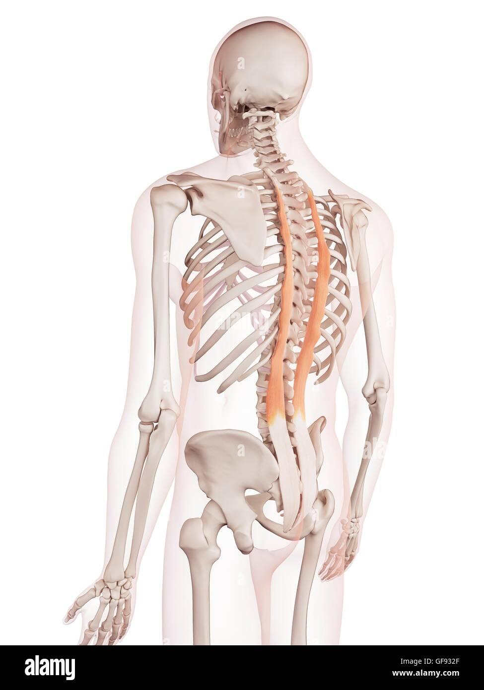 Fein Menschliche Nackenmuskulatur Bilder - Menschliche Anatomie ...