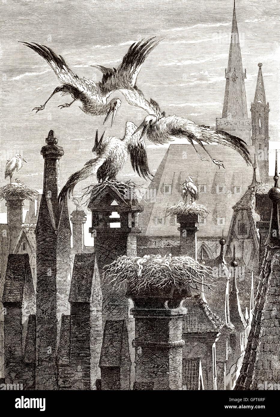 Storchennester in der Stadt von Straßburg, Elsass, Frankreich, 19. Jahrhundert Stockbild