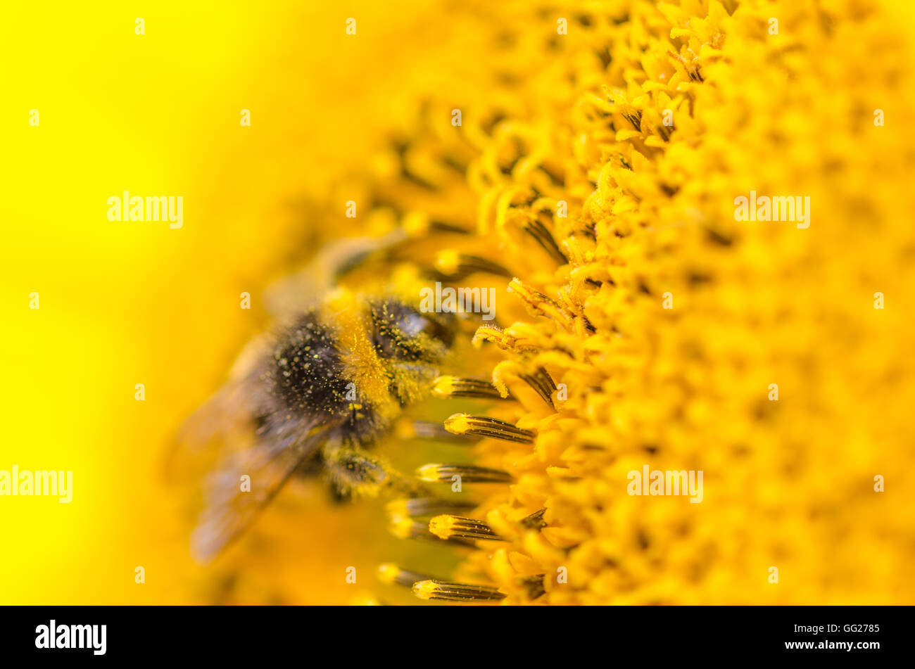 Bienen im Garten Stockbild