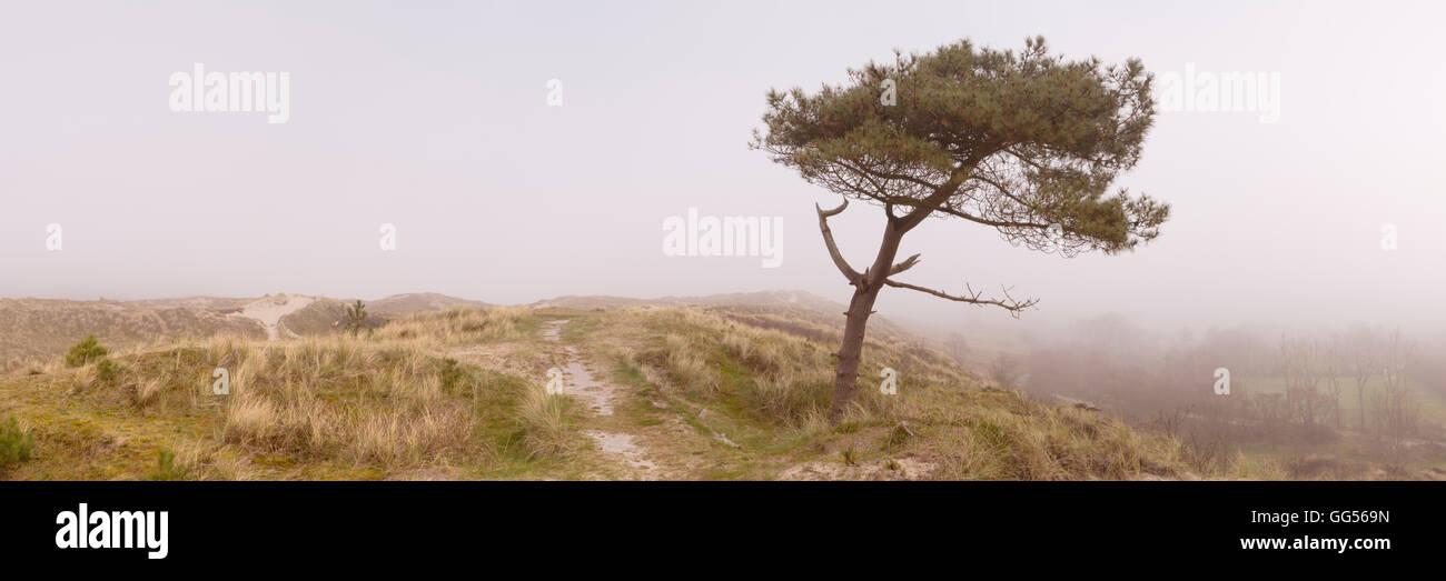 Ein einsamer Baum auf einer Düne auf der Insel Terschelling in den Niederlanden. Fotografiert an einem nebligen Stockbild