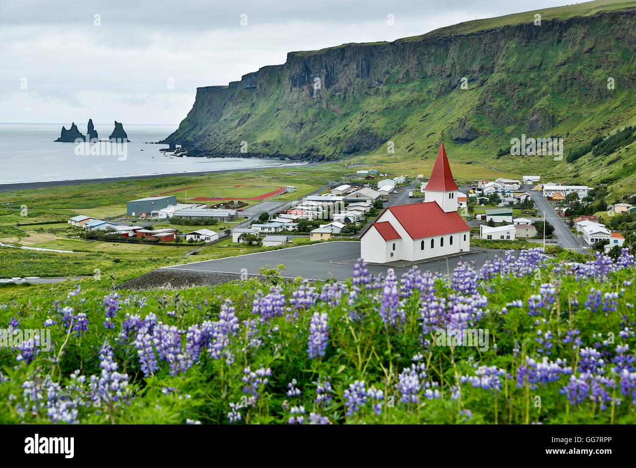 Wildblumen reyniskirja Kirche, Lupine (Lupinus arcticus) und reynisdrangar Stacks, Vik, Island Stockbild