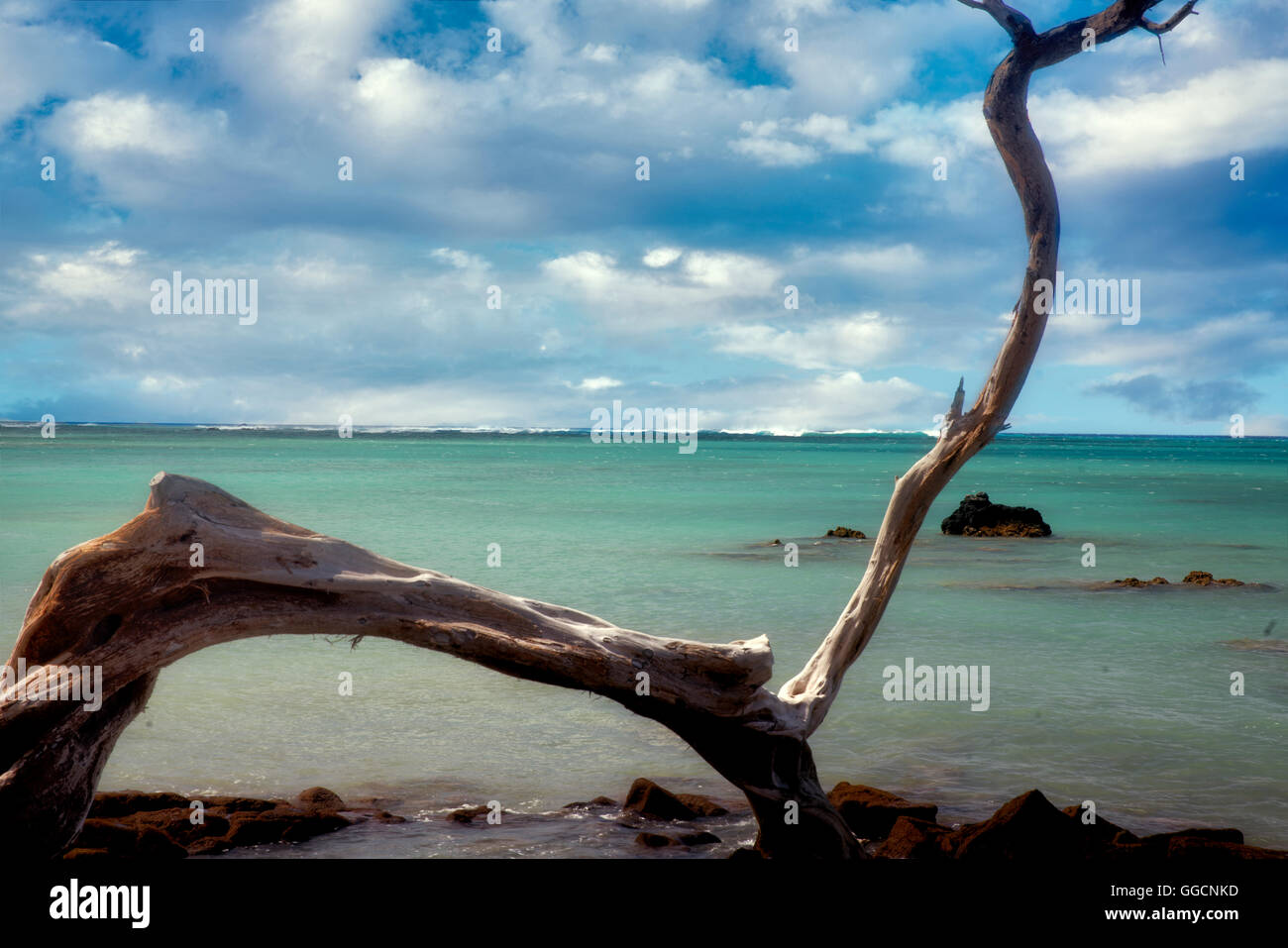 Ast und Ozean. Hawaiis Big Island. Stockbild