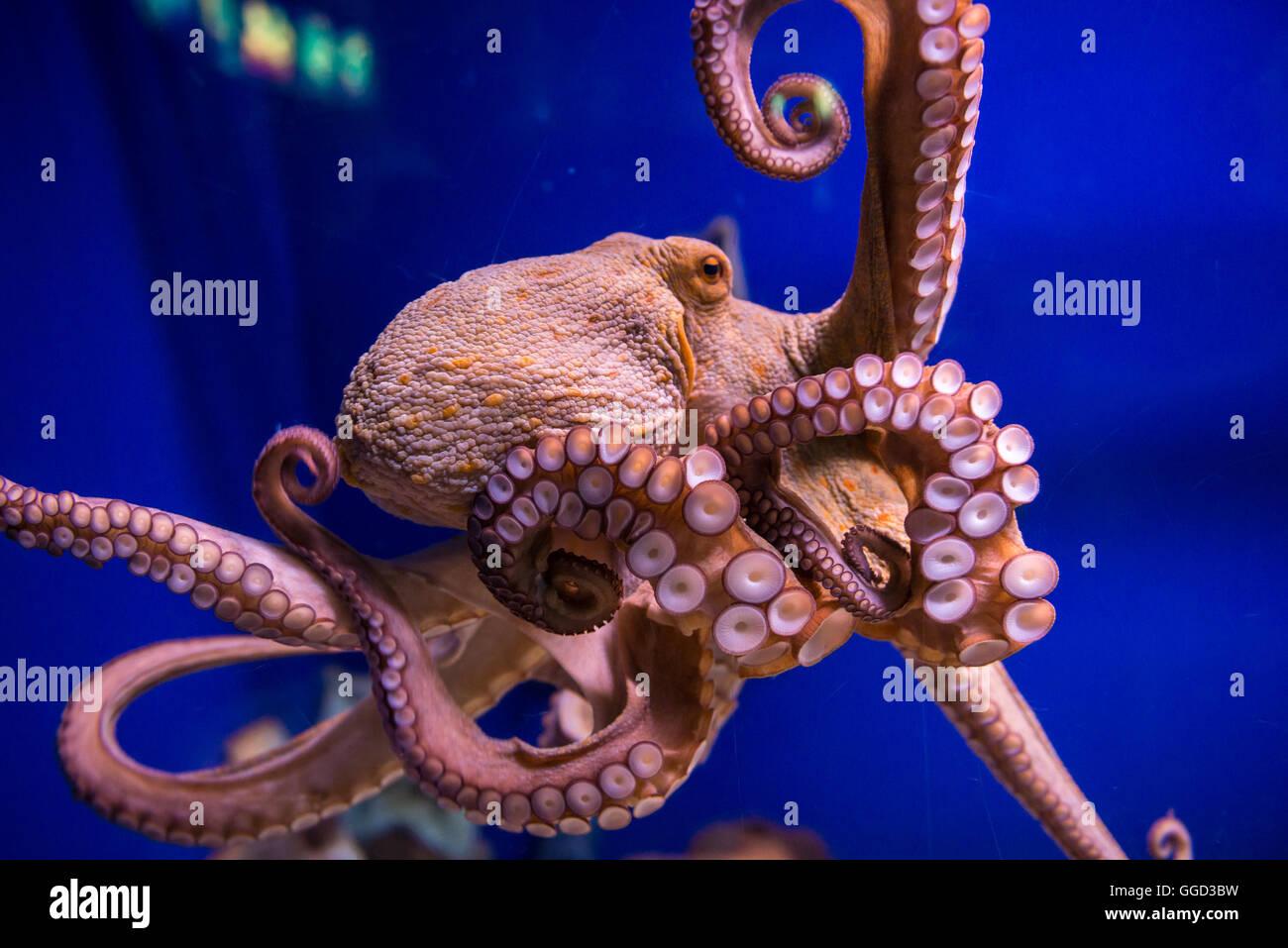 Krake Aquarium