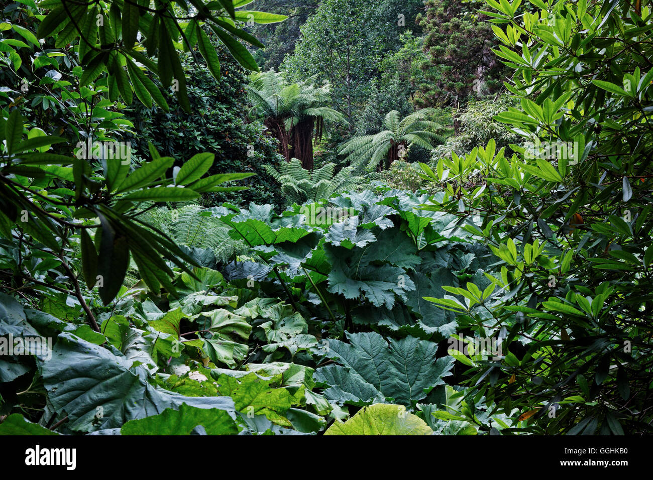 Lost Gardens of Heligan, Cornwall, England, Großbritannien Stockbild