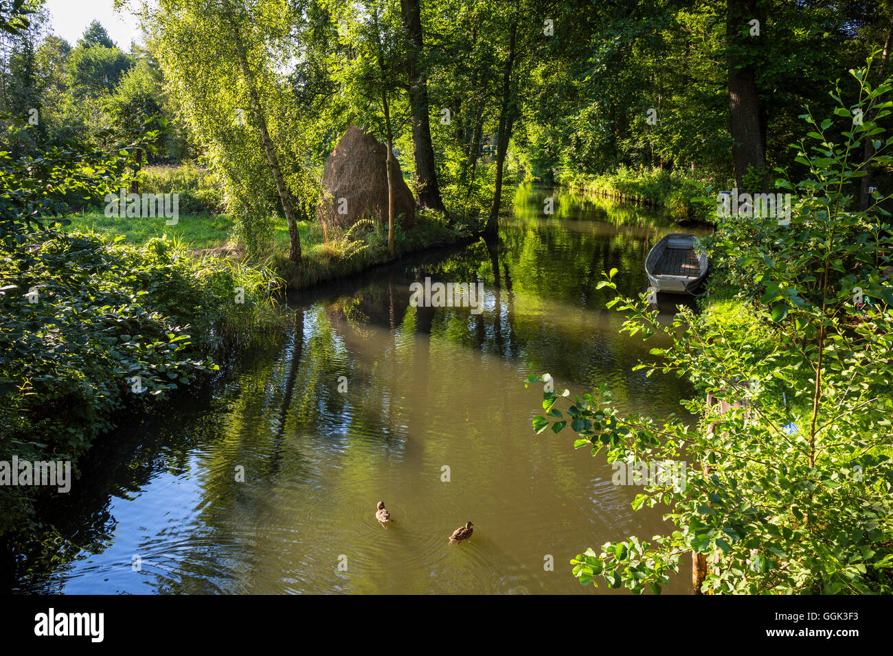 Fluss im Spreewald, Spree, UNESCO-Biosphärenreservat, Brandenburg, Deutschland, Europa Stockbild