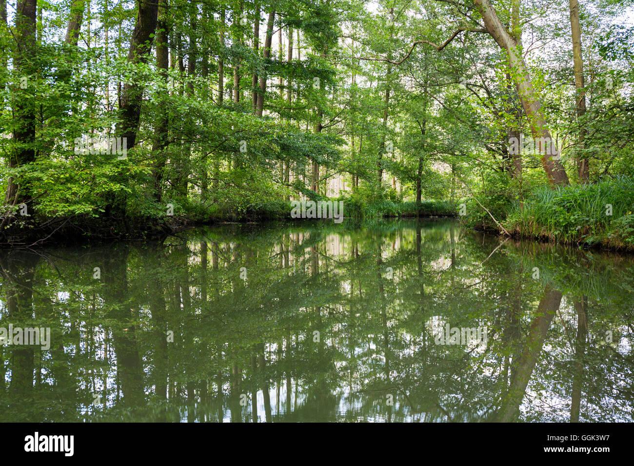 Fluss fließt durch den Spreewald, UNESCO Biosphären Reservat, Lübbenau, Brandenburg, Deutschland Stockbild