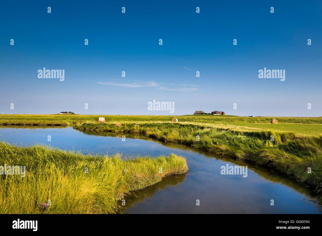 Salzwiesen und Wohnung Hügel, Hallig Langeness, Nordfriesischen Inseln, Schleswig-Holstein, Deutschland Stockbild